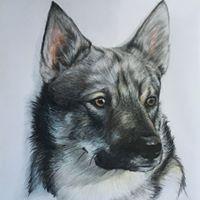 Swedish Valhund- Colored Pencil