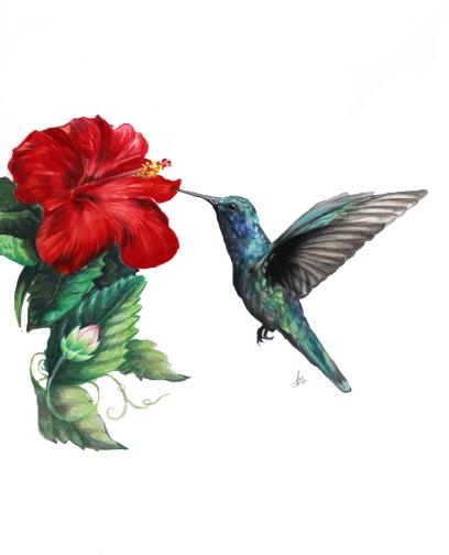 Hummingbird- Colored Pencil