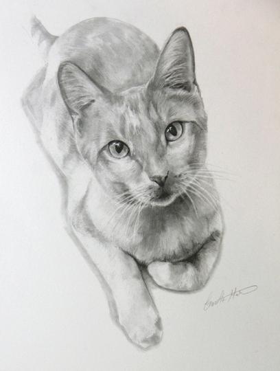 Cat-Graphite Pencil