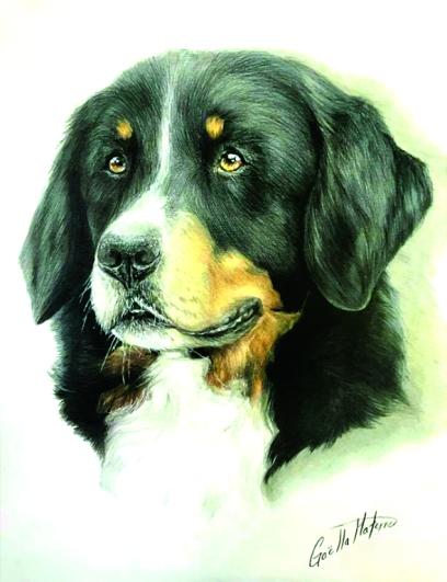Bernese Mountain Dog-Colored Pencil
