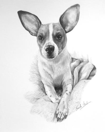 Jack Russel Terrier-Graphite Pencil