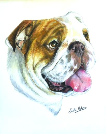 English Bulldog- Pastel
